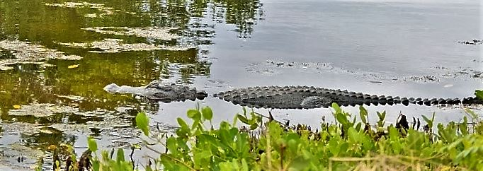 Florida Photo1