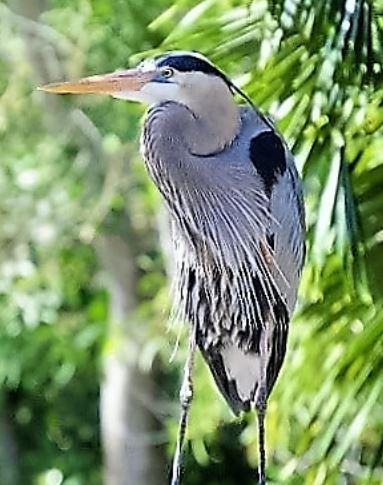 Florida Photo2