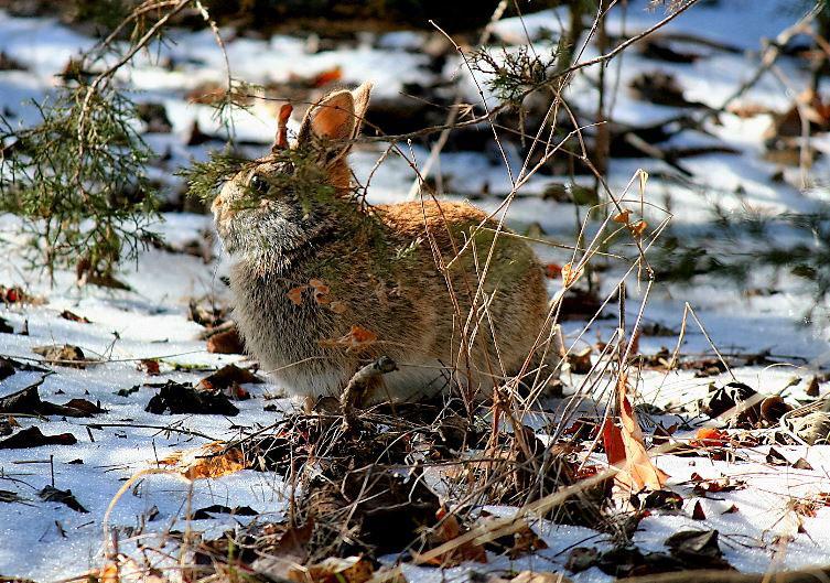 rabbithunting2