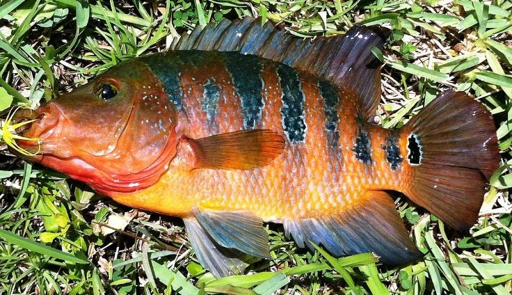 Florida fishing new fishbrain app share the outdoors for Healthiest types of fish