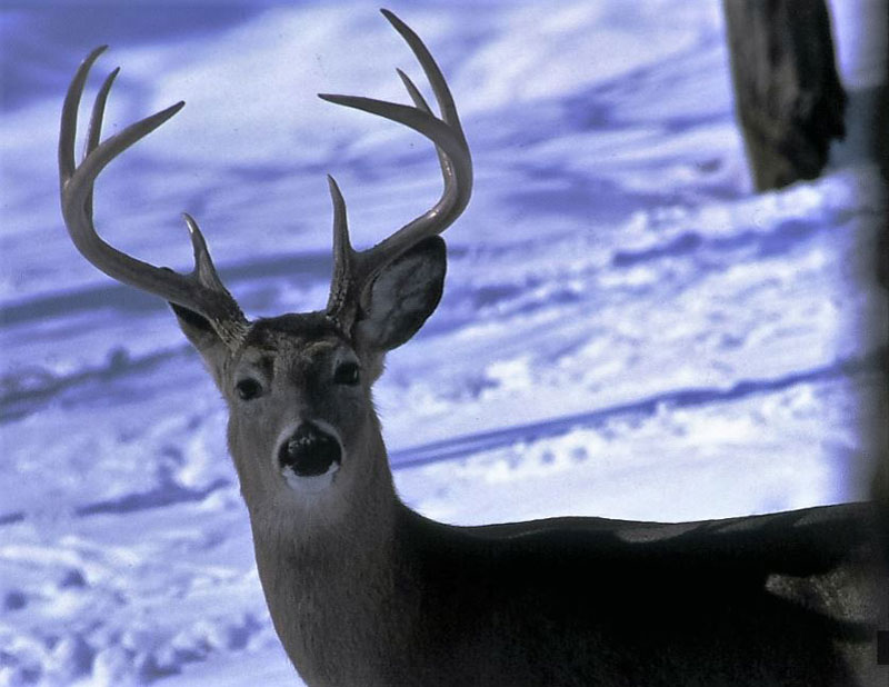 Six Tips for Bowhunting in the Cold - Late Can be Great