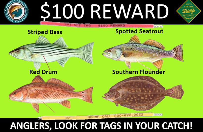 Earn $100 Reward in North Carolina Fishing Program