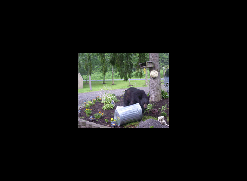 Need Citizen Help in Reporting and Reducing Nuisance Bear Incidents in New York State