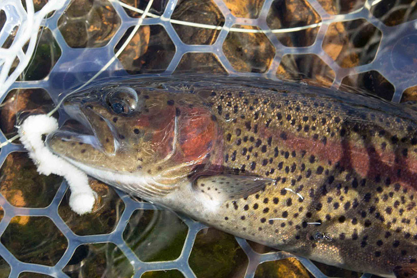 Beat the Heat: Catch a Trout