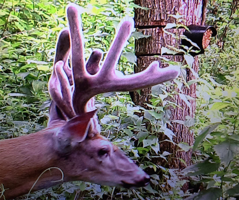 3 Steps to Giant Bucks!