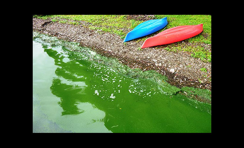 Harmful Algae Blooms (HABs)