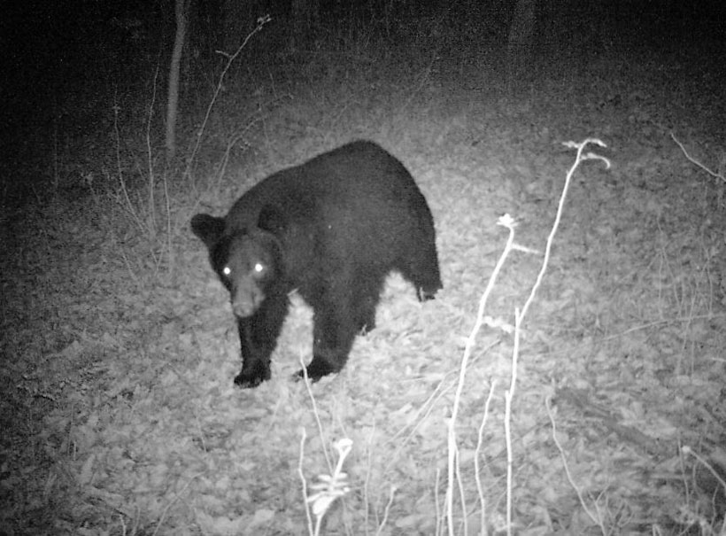 Florida Uses Science/Data to Manage Black Bears