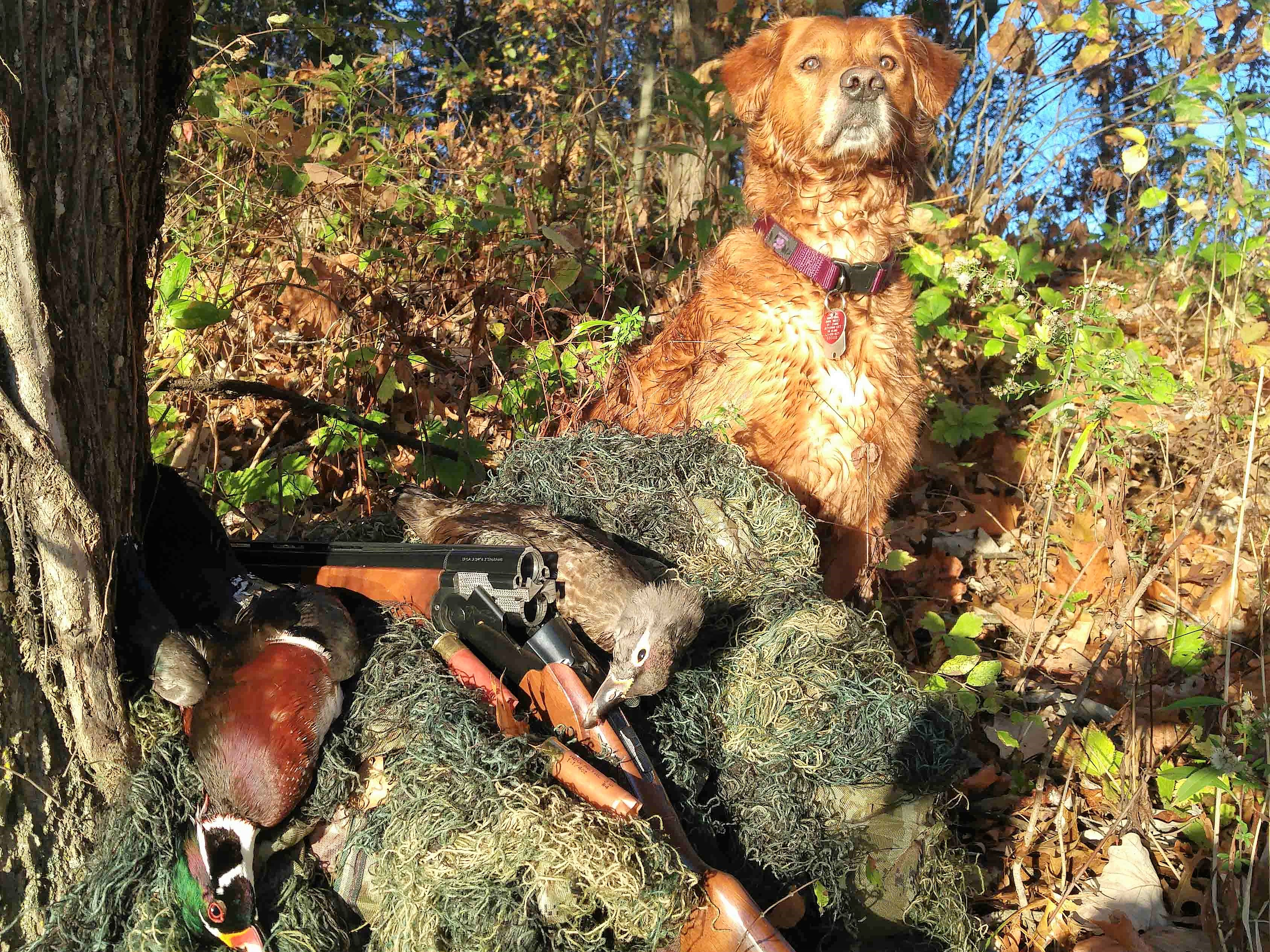 Green Timber Duck Hunting