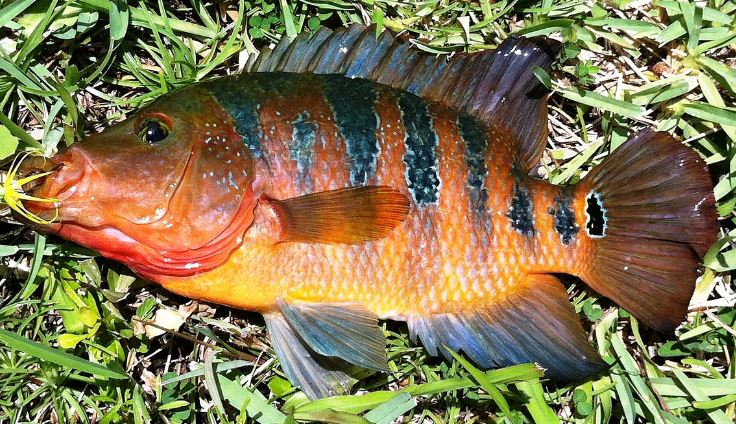 Florida Fishing - New Fishbrain App