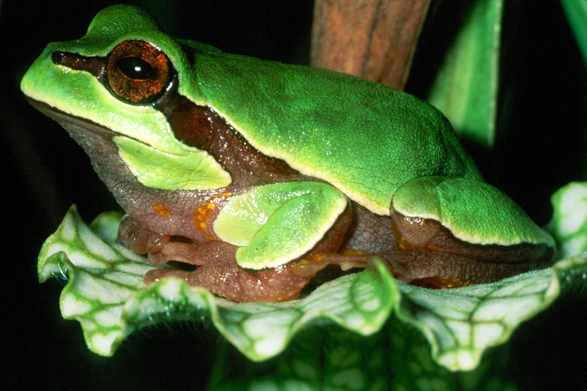 Florida Identifies Imperiled Species