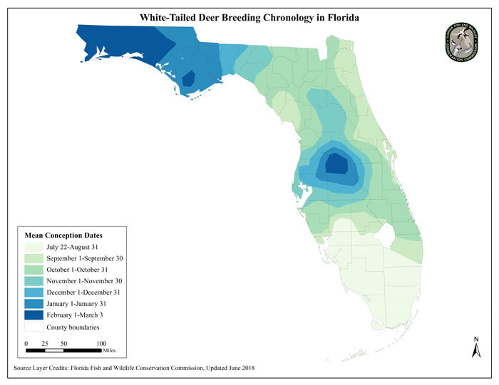 The Truth about Florida's Deer Rut – Deer Hunting Continues in Florida Zones
