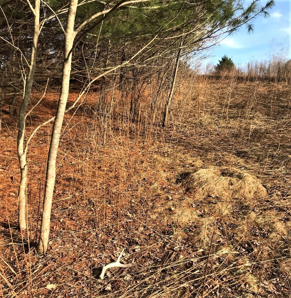 Valentine's Day – Perfect Time to Search for BIG BUCK Antler Sheds…on the Ground