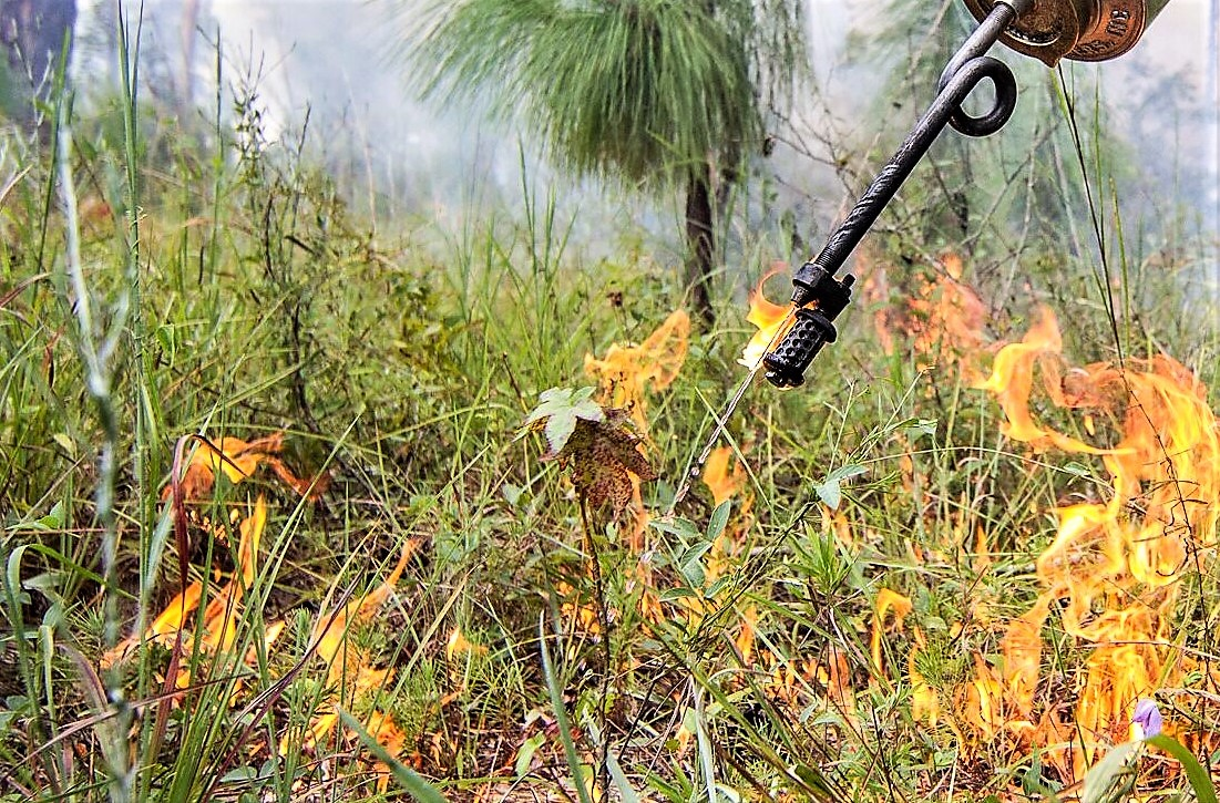 Prescribed Fires, Why are they Important?