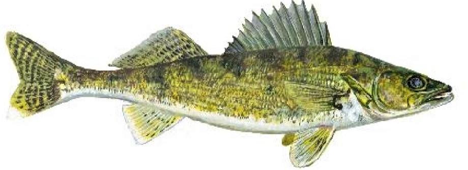Fall Fishing in La Crosse, Wisconsin: Binge-feeding time for Walleye, Bass, Catfish