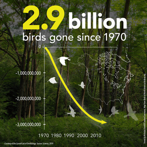 3 Billion Birds – GONE Since 1970