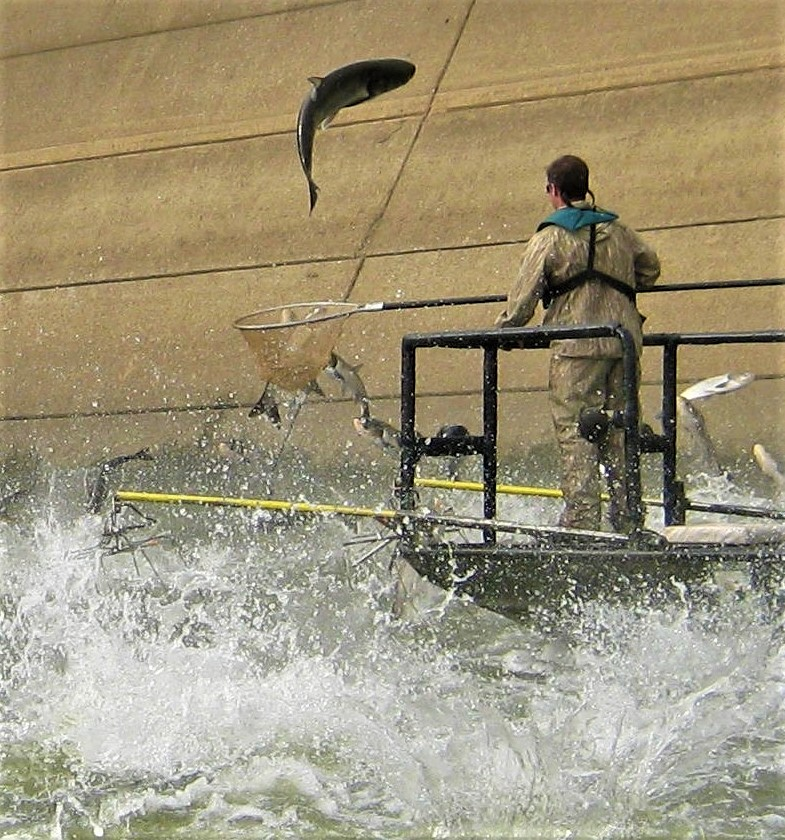 The Real Asian Carp Threat