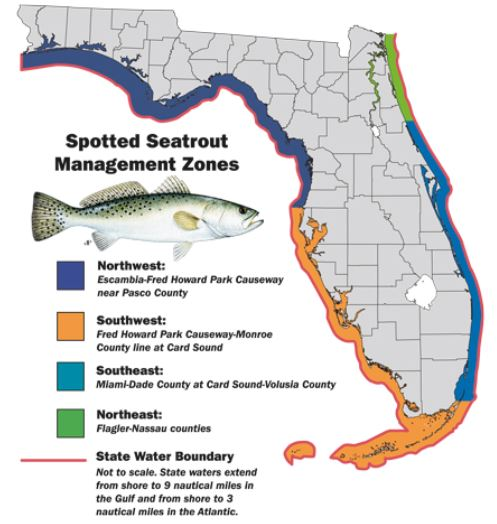 Soutwest Florida spotted seatrout remains CATCH & RELEASE ONLY through May 31, 2020