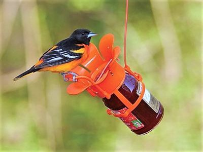 Spent Oriole Nests prompt Quick Shooting Lesson