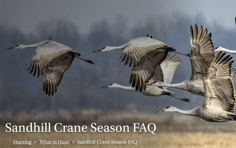 Alabama's 1st Sandhill Crane Hunting Season Deemed a Success