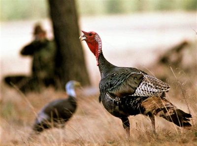How to Miss a Turkey - Extend your season...here are some TIPS!
