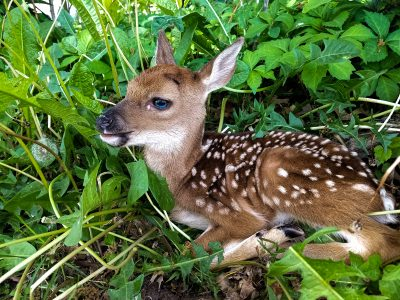 Newborn Wildlife, You Can Look but Don't Touch