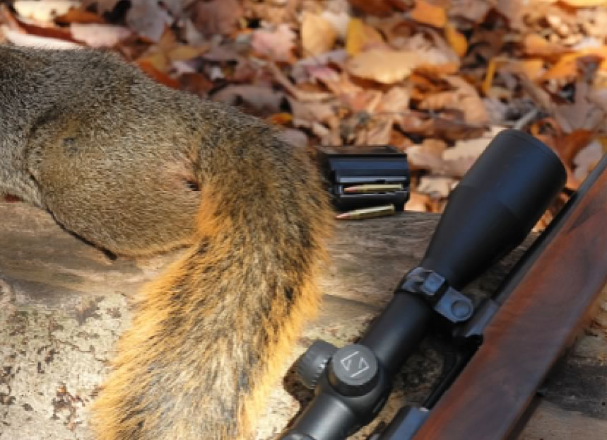 Squirrel Hunting - Where Hunters Learn to be Woodsmen