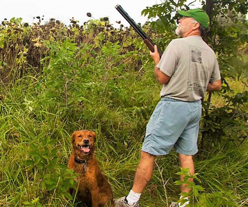 Dove Hunting Opportunities Abound