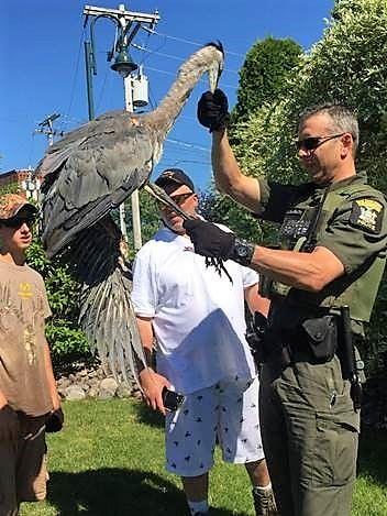 Big Birds Keep ECO's Busy - Onondaga County, NY
