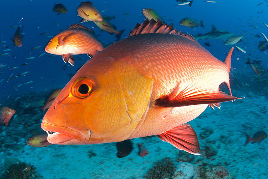 U.S. Secretary of Commerce Applauds Pilot Program to Allow States to Manage Recreational Red Snapper Fishing in Gulf of Mexico